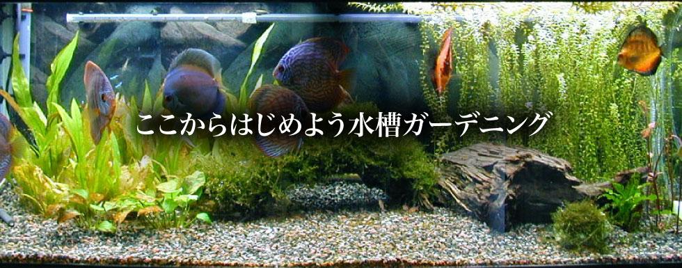 photo_slide011