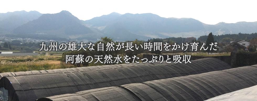 photo_slide03